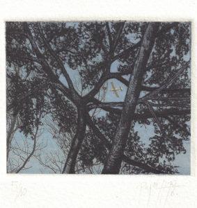 Maria Pujol : «The woods»