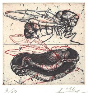 Asuna Yamauchi : «Thinking about insects – I: Drosophila»